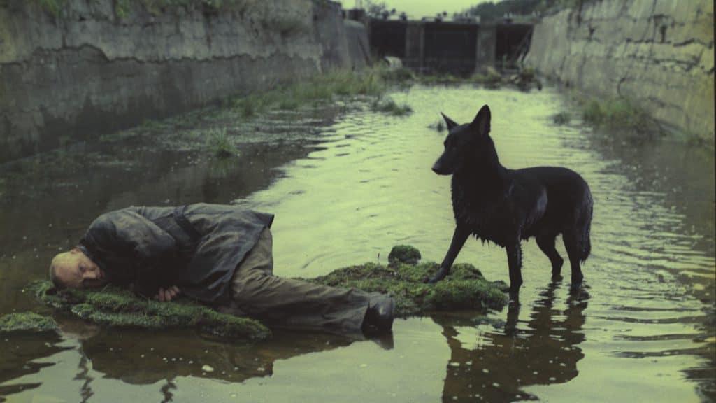 Чёрная собака провожает героев